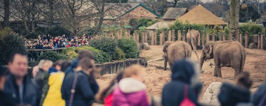Chester zoo record visitors 2018