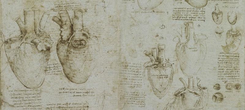 Leonardo da Vinci exhibition heart and coronary vessels