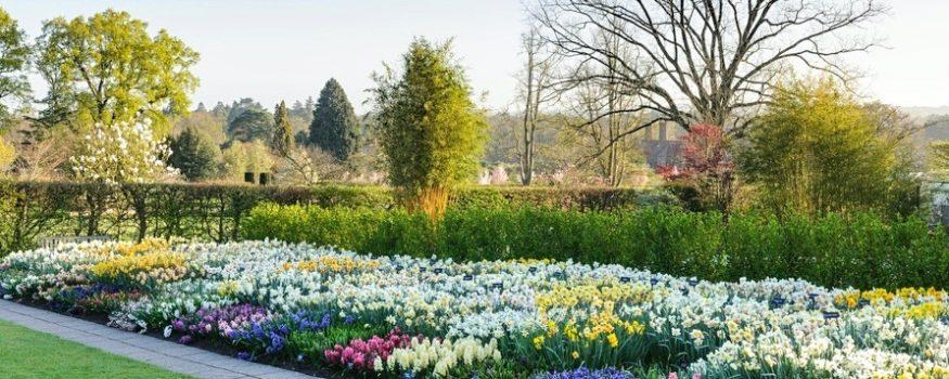 Groups RHS Garden spring 2020