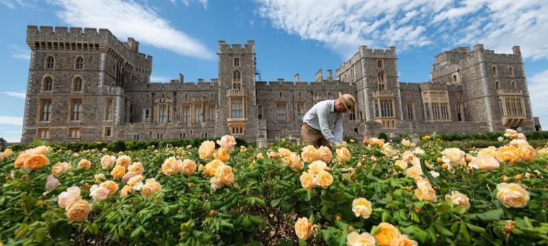 Windsor Castle East Terrace Rose Garden